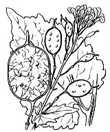 Photographie n°255.png du taxon