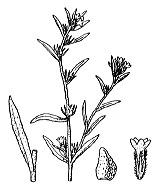 Photographie n°2570.png du taxon