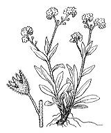 Photographie n°2600.png du taxon