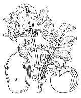 Photographie n°2624.png du taxon