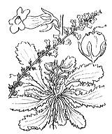 Photographie n°2672.png du taxon