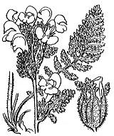 Photographie n°2789.png du taxon