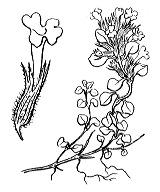 Photographie n°2871.png du taxon