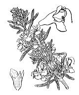 Photographie n°2882.png du taxon