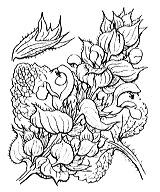 Photographie n°2888.png du taxon