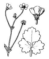 Photographie n°29.png du taxon