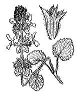 Photographie n°2929.png du taxon