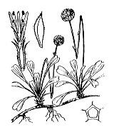 Photographie n°3056.png du taxon