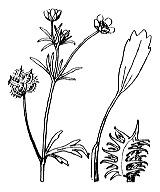 Photographie n°31.png du taxon