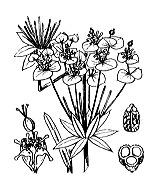 Photographie n°3230.png du taxon