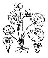 Photographie n°3344.png du taxon