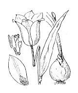 Photographie n°3371.png du taxon