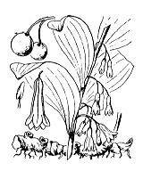 Photographie n°3489.png du taxon