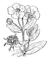 Photographie n°353.png du taxon