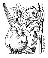 Photographie n°3556.png du taxon
