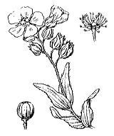 Photographie n°360.png du taxon