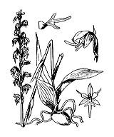 Photographie n°3618.png du taxon