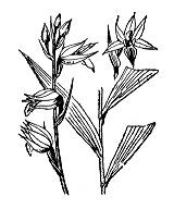 Photographie n°3630.png du taxon