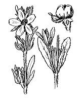 Photographie n°367.png du taxon