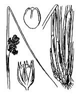 Photographie n°3719.png du taxon