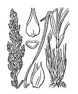 Photographie n°3819.png du taxon