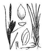 Photographie n°3849.png du taxon