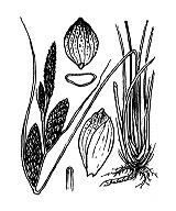 Photographie n°3851.png du taxon