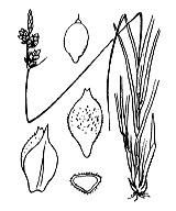 Photographie n°3865.png du taxon
