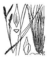 Photographie n°3884.png du taxon