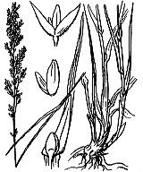 Photographie n°4012.png du taxon