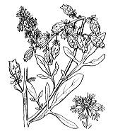 Photographie n°402.png du taxon