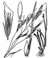 Photographie n°4051.png du taxon