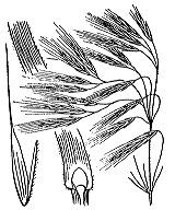 Photographie n°4190.png du taxon