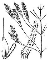 Photographie n°4198.png du taxon