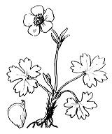 Photographie n°42.png du taxon
