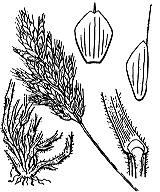 Photographie n°4203.png du taxon