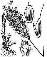 Photographie n°4204.png du taxon