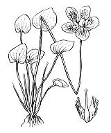 Photographie n°421.png du taxon