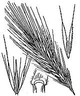 Photographie n°4212.png du taxon