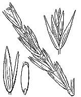 Photographie n°4218.png du taxon