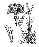 Photographie n°469.png du taxon