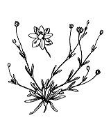 Photographie n°506.png du taxon