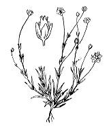Photographie n°510.png du taxon
