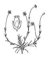Photographie n°512.png du taxon