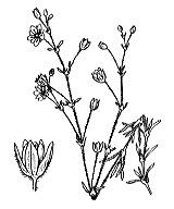 Photographie n°585.png du taxon