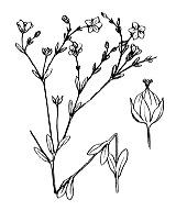 Photographie n°600.png du taxon