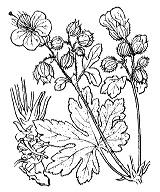 Photographie n°632.png du taxon