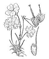 Photographie n°643.png du taxon