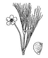 Photographie n°7.png du taxon