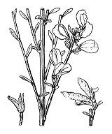Photographie n°772.png du taxon